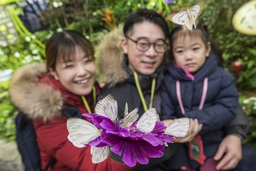 에버랜드 미리 봄 나비정원 (1).jpg